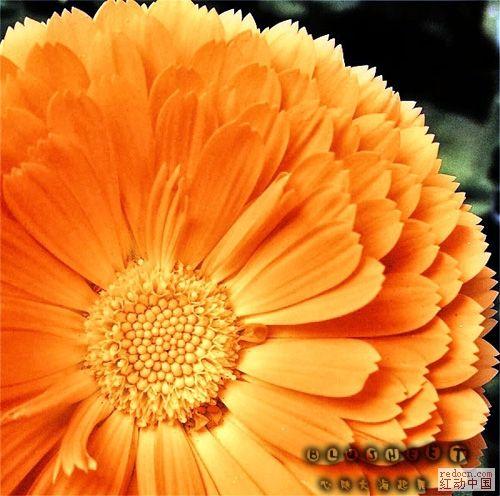 花朵颜色层次和锐度-心随大海起舞.jpg