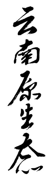 云南原生态.jpg