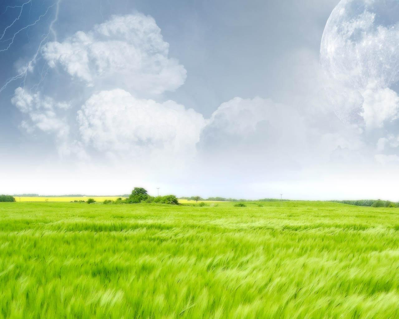 壁纸 草原 成片种植 风景 植物 种植基地 桌面 1280_1024