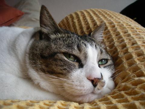 壁纸 动物 猫 猫咪 小猫 桌面 480_360