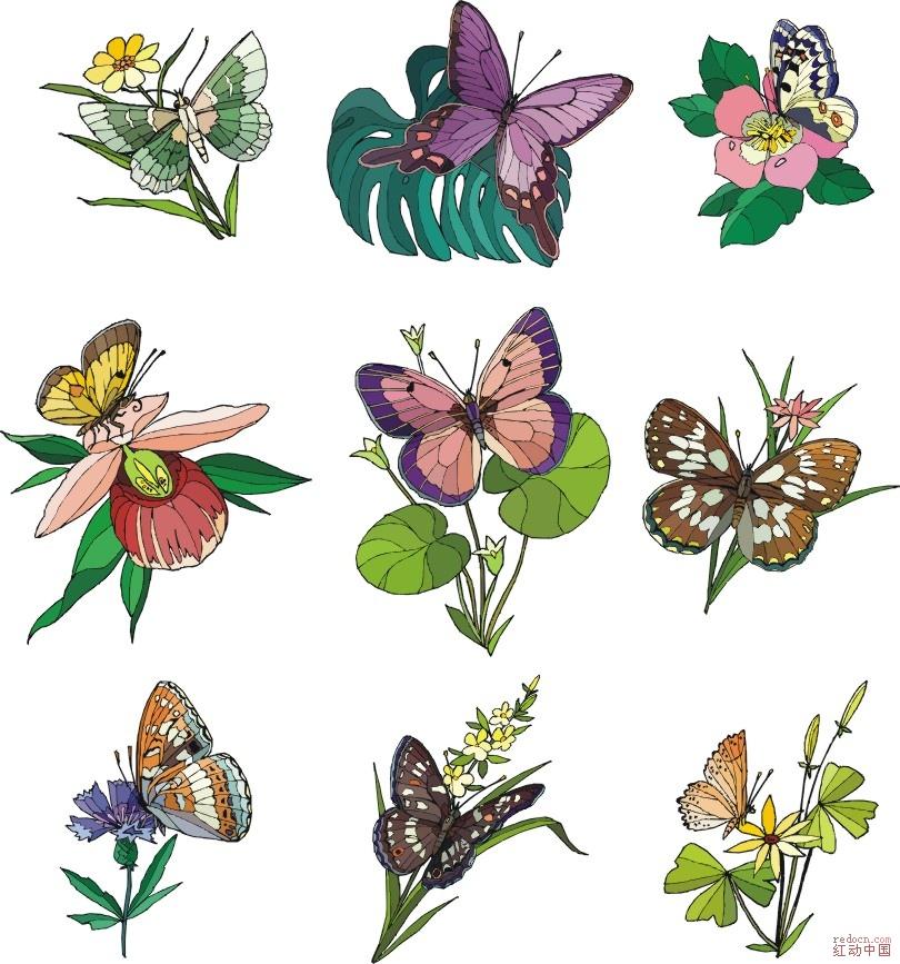 矢量蝴蝶和花cdr_矢量素材_素材下载_资讯娱乐 第一网