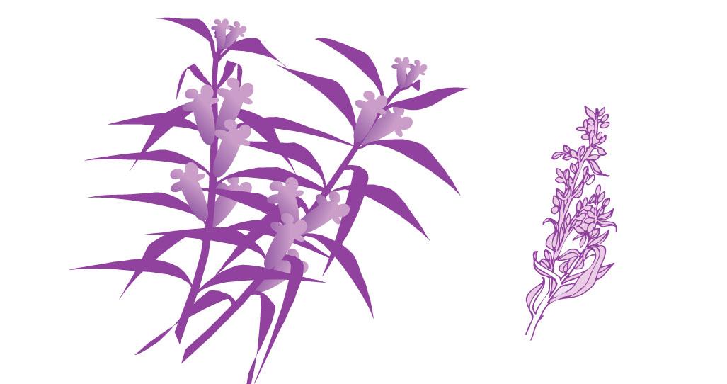 (求植物等化妆品印刷用的矢量图)化妆品植物素材求助