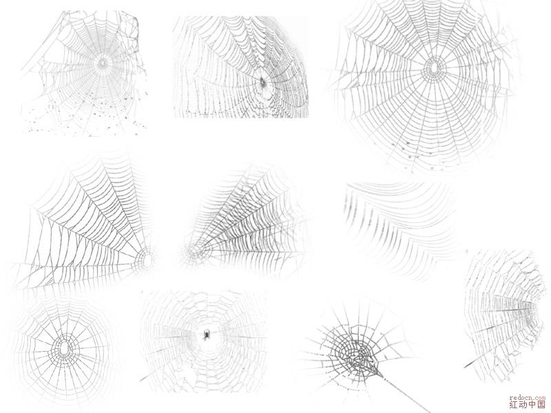 插画系列和蜘蛛网-笔刷-ps小工具-下载区