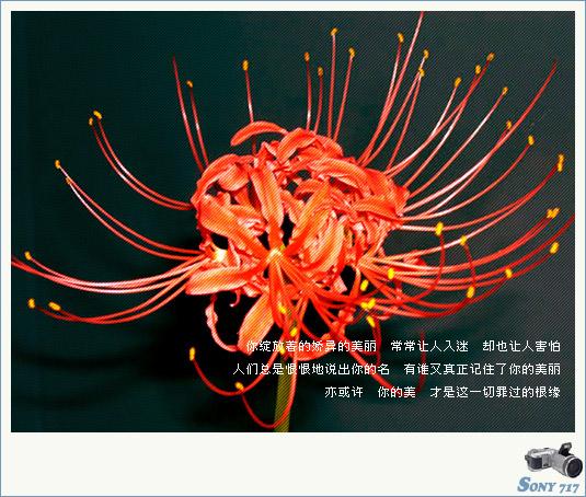 蔓珠沙华(曼陀萝) - 彼岸花 - 死亡之花