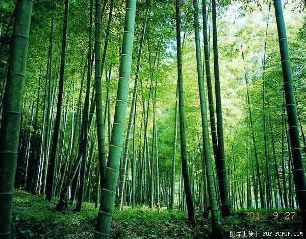 壁纸 风景 森林 植物 桌面 600_468