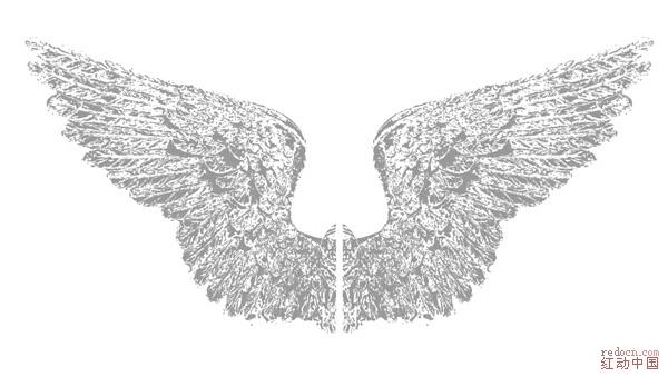 重量级发布:精致花卉,翅膀