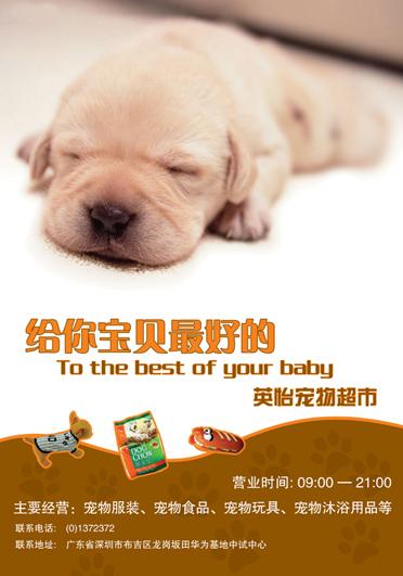 一个宠物超市海报 宣传单 折页 平面 原创设计 第一设计