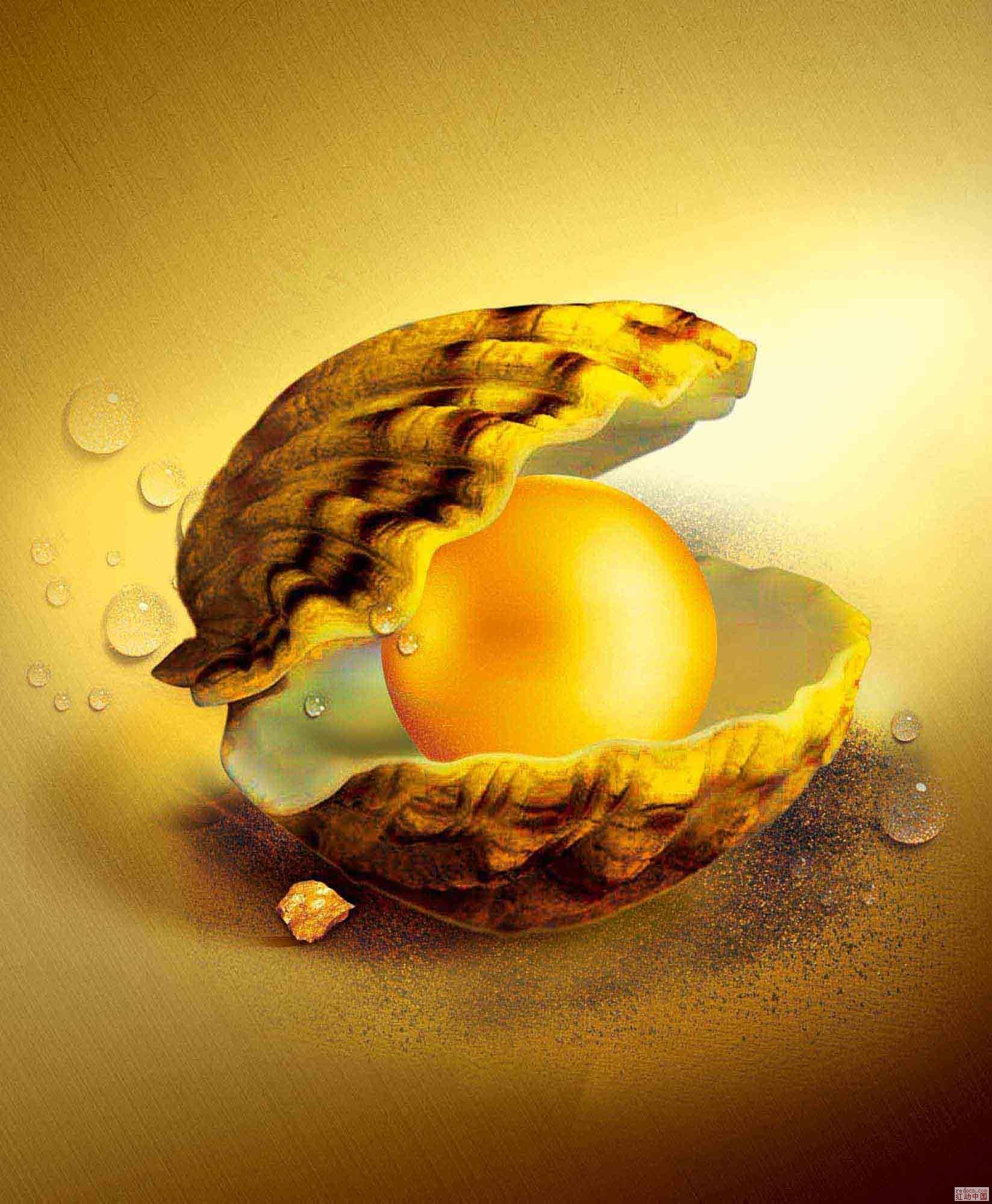 求珍珠蚌比较真实的素材图片