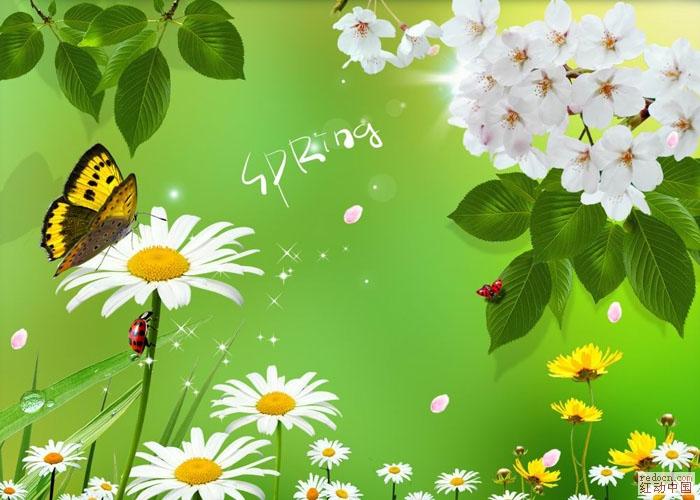 清新植物蝴蝶花卉 自然风景 自然生态