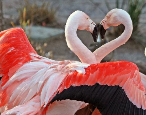 漂亮的动物摄影作品欣赏