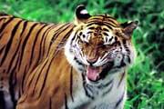 图片标题:兽中之王之(虎) 关键字:HU002.jpg  加入时间:2008-5-22 10:12 加入作者:redocn