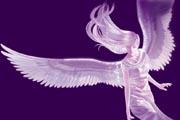 图片标题:天使 关键字:天使的翅膀.jpg  加入时间:2008-7-13 12:17 加入作者:阿Q第二
