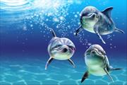 图片标题:原野  PS实例教程——海豚 关键字:ps海豚制作教程  加入时间:2008-8-19 11:20 加入作者:redocn