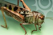 图片标题:原野  PS实例教程——蚂蚱 关键字:设计图片  加入时间:2008-8-19 11:25 加入作者:redocn