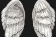 图片标题:超逼真天使、恶魔翅膀 关键字:羽毛 天使翅膀  加入时间:2008-8-29 22:25 加入作者:redocn