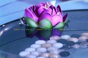 图片标题:花非花,雾非雾 关键字:设计图片  加入时间:2009-7-18 10:33 加入作者:lq8639