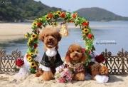 图片标题:最可爱最无懈可击的婚纱照 关键字:03.jpg  加入时间:2011-11-8 14:32 加入作者:yu790416